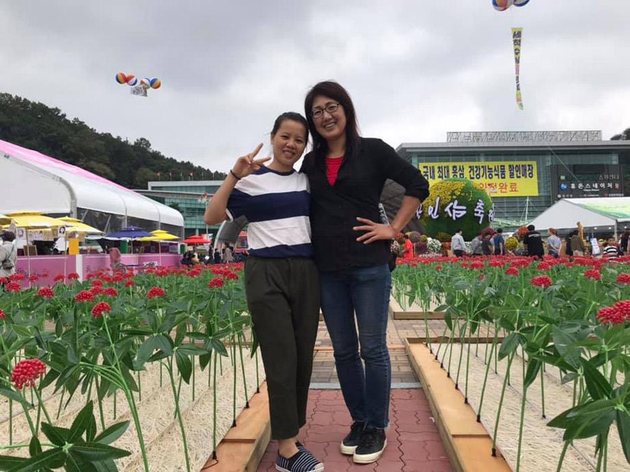 Hình ảnh tại lễ hội thu hoạch sâm tươi lớn nhất Hàn Quốc hàng năm được tổ chức vào đầu tháng 10