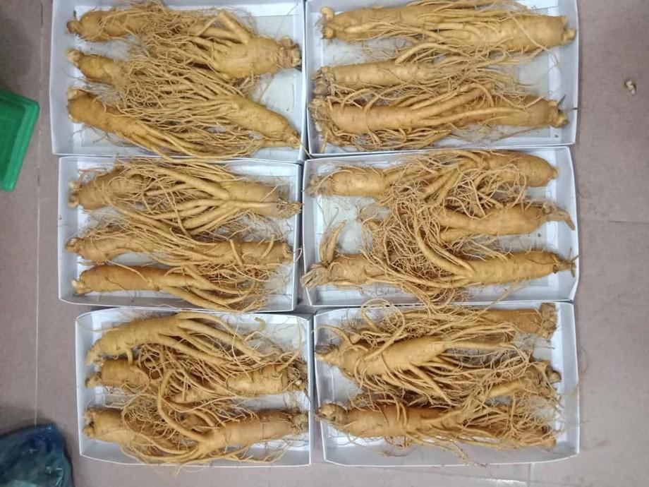 Sâm tươi Hàn Quốc 5 củ 1 kg thân dài dáng đẹp củ to đều nhau đạt chuẩn 6 năm tuổi