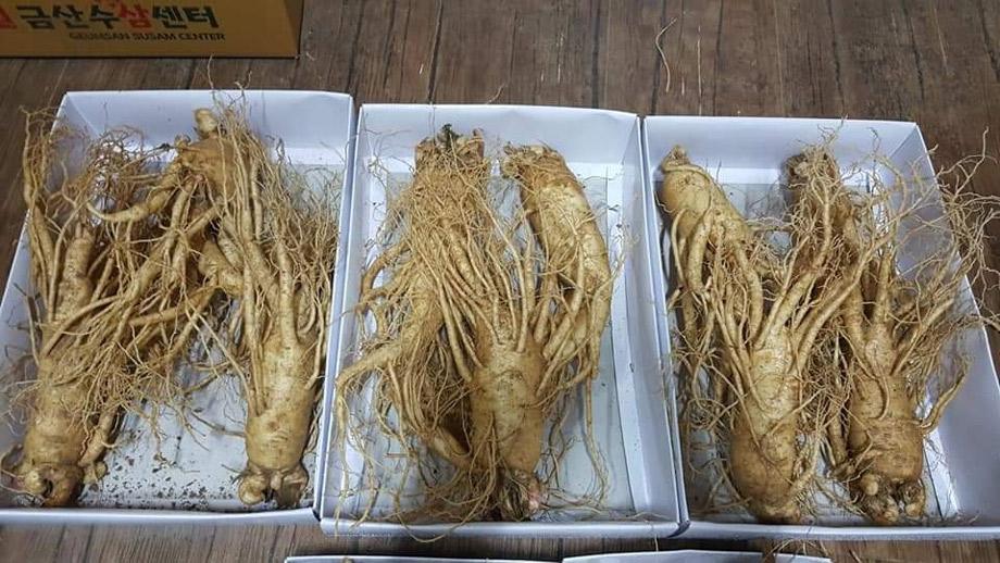 Hầu hết sâm 3 củ và 4 củ 1 kg tại Việt Nam