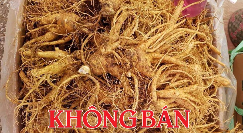 Sâm thân ngắn và nhiều rể tại Việt Nam có giá rẻ khoảng 1,8 - 2 triệu 1 kg 5 củ