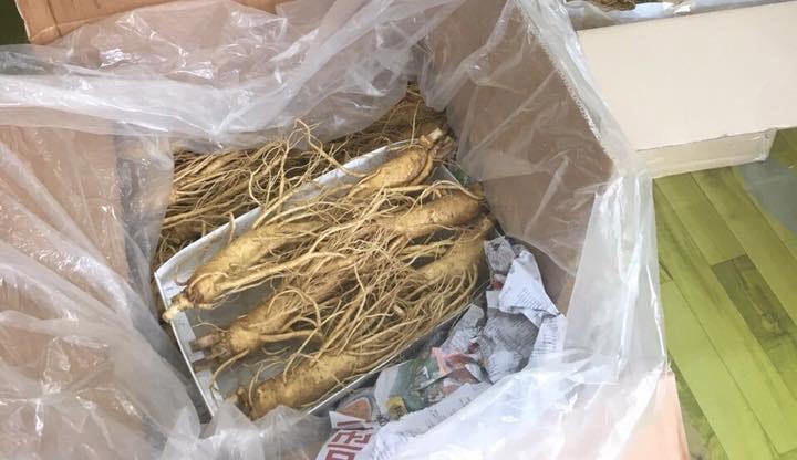 Nhân sâm tươi Hàn Quốc 6 năm tuổi được đóng gói chuyển về Việt Nam sau khi thu hoạch