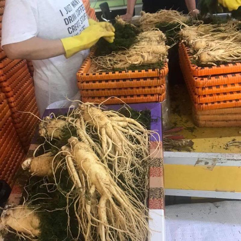 Bảng giá bán nhân sâm tươi Hàn Quốc 5,6 củ 1 kg dịp tết 2020