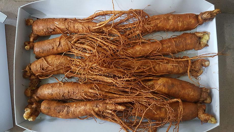 Đánh giá về sâm tươi Hàn Quốc loại 10 củ 1 kg có đủ 6 năm tuổi không?